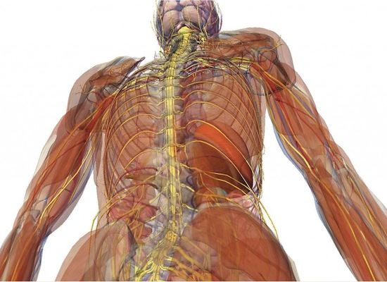 vagus nerve, what is the vagus nerve, vagus nerve stimulator